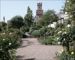 Rose garden with Obernburg's city emblem, the Almosenturm